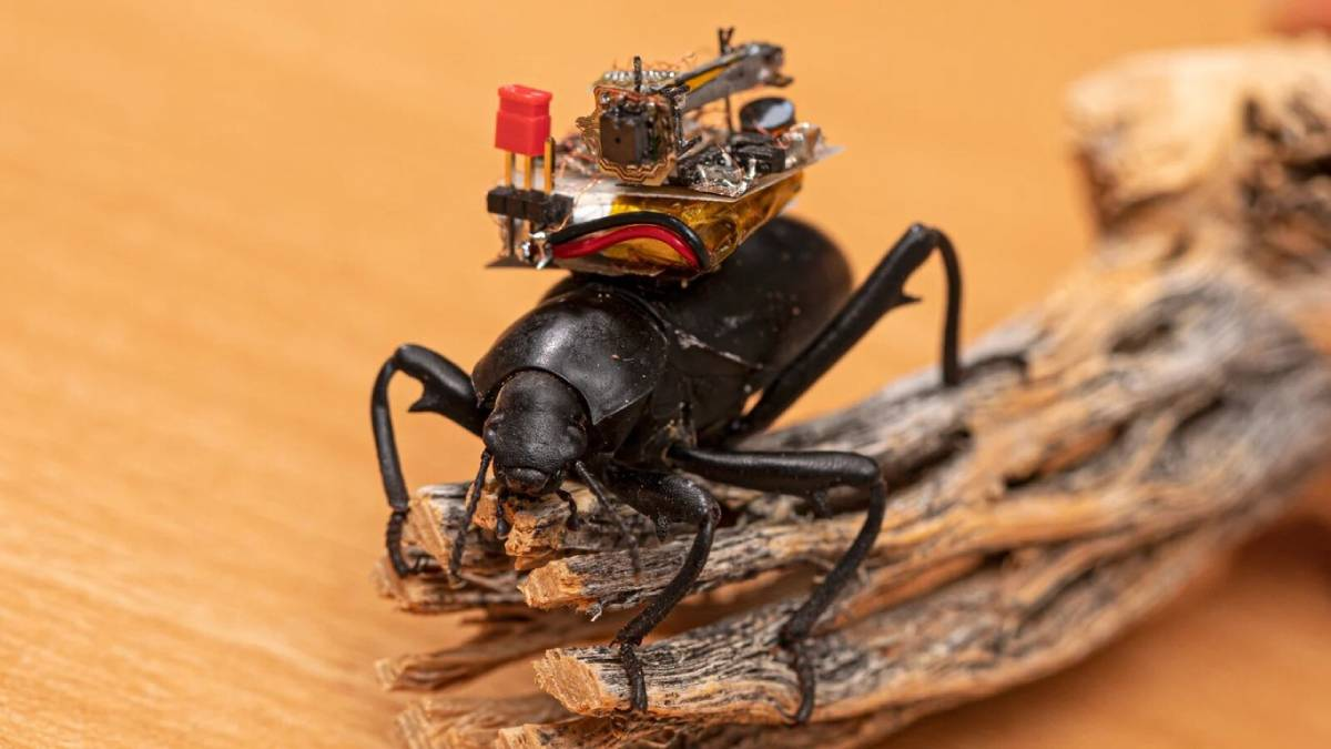 Projeto financiado pela Microsoft desenvolve câmara sem fios para insetos