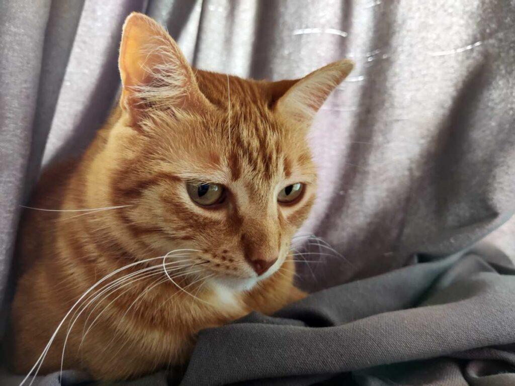 fotografia gatos